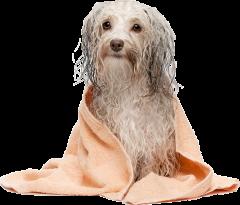groomingdog.png